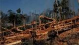 Бразилія відновлює величезна амазонське заповіднику